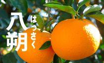 はっさく10kg S~Mサイズ 和歌山県から農園直送!