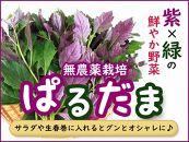 紫&グリーンが綺麗な野菜ぱるだま1kg(はんだま・水前寺菜)