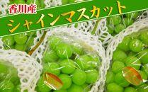 <香川産>大粒シャインマスカット[秀品]5kgの詰め合わせ