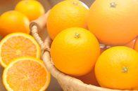 清見オレンジ10kg 大小混合サイズ 和歌山県から農園直送