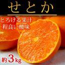 ■とろける食感!ジューシー柑橘せとか約3kg[2021年2月~発送]