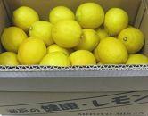 【受付終了間近】瀬戸内レモン約5kg