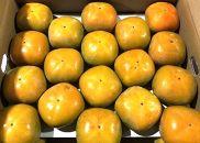 【ポイント交換】三豊市産たねなし柿(刀根柿)約7.5kg