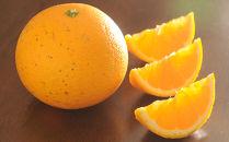 清見オレンジ・甘夏 旬の柑橘詰合せ7.5Kg
