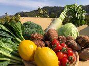 【産地直送】採れたて新鮮園主おすすめ季節の野菜セット