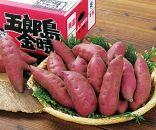 金沢大和百貨店選定〈堀他〉五郎島金時5kg