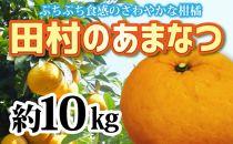 ■人気の田村のあまなつ(M~3L) 約10kg  紀州グルメ市場