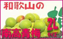 <令和元年発送>【梅干づくり用】紀州南高梅(2Lサイズ/4kg)