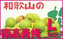 <令和元年発送>【梅干づくり用】紀州南高梅(Lサイズ/4kg)
