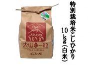 【ポイント交換専用】減農薬・減化学肥料 特別栽培米こしひかり10kg(白米)