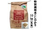 【ポイント交換専用】減農薬・減化学肥料 特別栽培米こしひかり10kg(玄米)