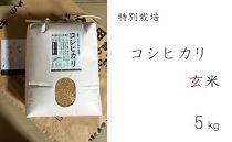 特別栽培 コシヒカリ 玄米5kg