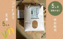 【5か月連続お届け】特別栽培 コシヒカリ 玄米5kg