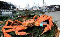 【石川県産】産加能かに(ずわい蟹)生重量900g×1匹