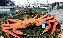 【石川県産】加能かに(ずわい蟹)生重量800g×1匹