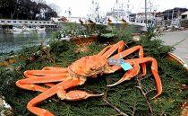 【石川県産】加能かに(ずわい蟹)生重量500g×1匹