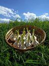 『幻の生にんにく』1.5kg【福地ホワイト六片種】宮城県登米市産