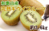 ■【数量限定】和歌山県産キウイフルーツ約3.6kg・秀選品