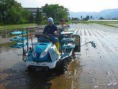 【頒布会】南魚沼産(しおざわ)こしひかり農薬不使用米精米2Kg×12回