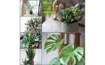 年6回隔月で植物をお届けします。「植物と過ごす1年間インドアグリーンライフ」<LotusGarden>