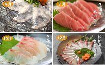 【季節の特別なお刺身定期便】春夏秋冬佐伯産の特別なお魚をお刺身にしやすい切り身にして年4回お届けいたします