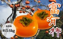 【秋の味覚】柿の代表格 和歌山の富有柿 たっぷり約3.6Kg 【紀ノ川グルメ市場】