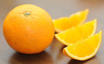 清見オレンジ7.5kg 和歌山県下津町から農園直送! まごころ産直みかん