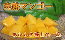南国の恵み 完熟マンゴー 秀品約2kg