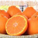 紀州有田産不知火(しらぬひ)約5kg[2021年2月中旬頃~発送]