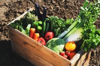 『頒布会』愛たい菜旬の野菜詰合せ 12か月定期便