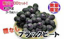【品切中】[希少種]香川産の種なしぶどうブラックビート