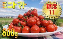 甘みと酸味のバランスが絶妙な美味しいミニトマト800g