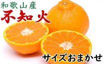 【厳選】和歌山産不知火(デコ)(20玉~28玉おまかせ)
