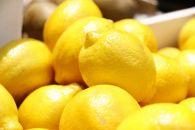 【産直】和歌山産レモン約5kg(サイズ混合)