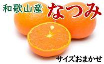 ■【希少柑橘】和歌山産なつみ約5kg(S~2Lサイズおまかせ)