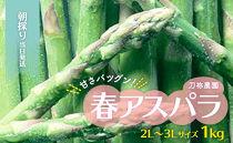 刀祢農園 朝採り当日発送「甘さ抜群!春アスパラ」2L~3Lサイズ(1キロ)【2019年春発送】