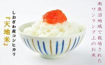 【産地限定】JAみなみ魚沼しおざわコシヒカリ「天地米」10kg