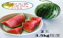 小玉スイカ2玉 斎藤農園ブランド「ひとりじめプレミアムV」/3.5kg程度