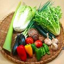 【産地直送新鮮野菜】 高知県産 土佐季節の野菜詰め合せセット
