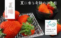 2019年分予約☆【夏イチゴ】奇跡のひと粒「夏瑞」2パックセット