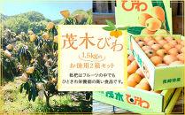 「茂木びわ」お徳用2箱セットです!!