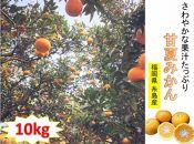 【限定50】さわやかな果汁たっぷり☆糸島産甘夏みかん