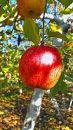 【2019年度】りんご 3kg