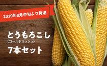 【2019年8月中旬より発送】とうもろこし(ゴールドラッシュ)7本セット