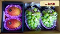 <ご家庭用>【優品】島原半島の恵いっぱいの完熟マンゴー シャインマスカット詰め合わせ