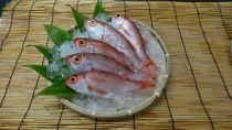 煮てよし焼いてよし!日本海産のどぐろ(5尾+鯛の頭付き)