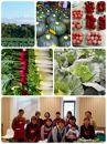 BM097酒田市農業女子会が贈るおかませ野菜ボックス7~8種