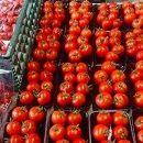 BM115おくやまスマイル農園のフルーツトマトの詰め合わせ1,6kg