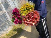 BM180佐藤庄右衛門の花束『アルストロメリア』3色15本ピンク・黄色・紫