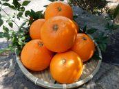 ■マルユー園清見オレンジ約5kg(ご家庭用サイズおまかせ)